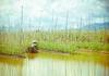 Inle's floating gardens, Burma